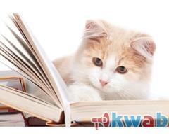 Поможем написать курсовую работу в Перми