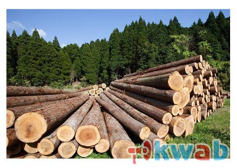 Продаем лес кругляк